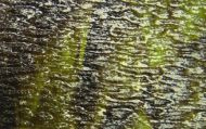K162GH-Lime Green/Brown Streaky Granite 10.5